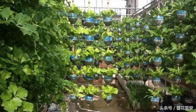 全自动化立体种植菜园子竟由1000个塑料瓶造就?